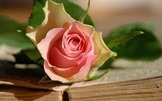 Обои Розовая роза в открытой книге