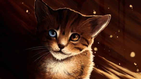 Обои Рыжий котенок с разноцветными глазами
