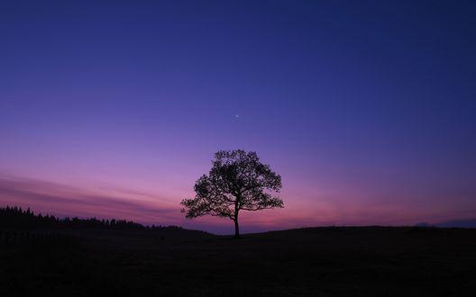 Обои Одинокое дерево на фоне сумеречного неба