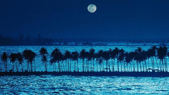 Обои Лунная ночь на острове Пуэрто-Рико / island of Puerto Rico, вода и пальмы создают причудливые отблески и силуэты