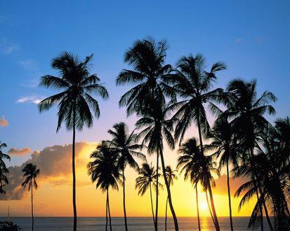 Обои Пальмы на морском берегу при свете заходящего солнца