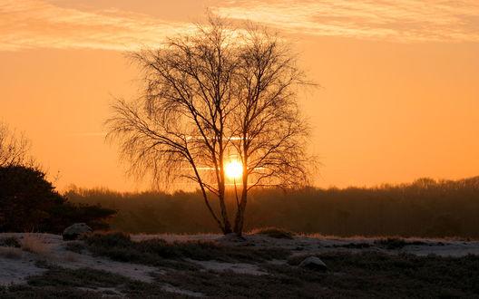 Обои Неяркое зимнее солнце просвечивает сквозь голые ветви дерева
