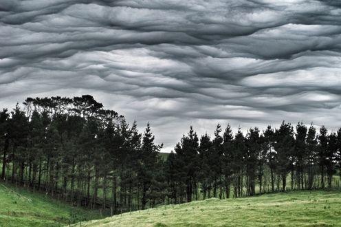 Обои Облака необычной формы над хвойным лесом