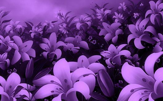 Обои Цветущие лилии в сиреневых тонах