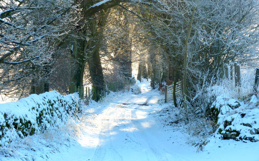 Обои Проселочная дорога, занесенная снегом, с деревьями причудливой формы, стоящими на обочине