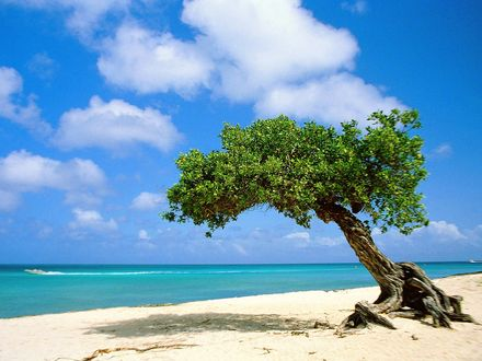 Обои Одинокое дерево на берегу моря