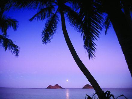 Обои Пальмы на берегу моря, в небе светит луна