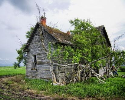 Обои Заброшенный дом заросший деревьями
