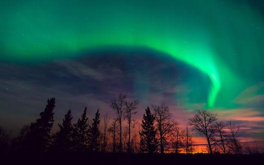 Обои Силуэты  деревьев на фоне звездного неба и северного сияния