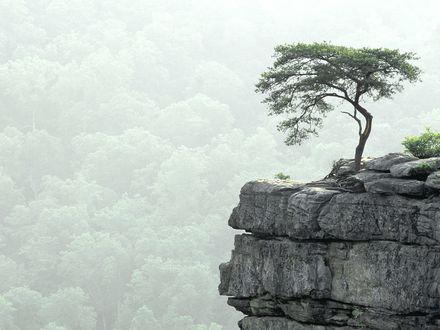 Обои На скале, почти на самом ее краю, растет маленькое деревце