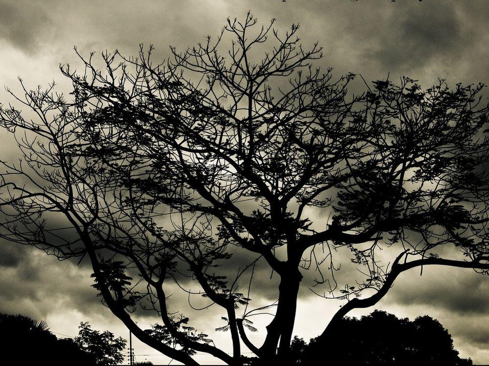 заказ услуг черные деревья фото помощью ручного фрезера