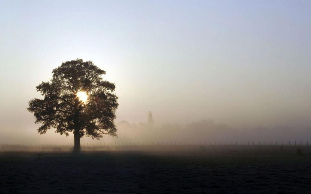 Обои для рабочего стола Утренний туман, солнечные лучи еле пробиваются сквозь крону дерева
