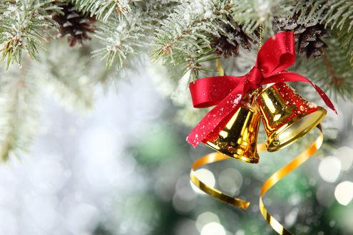 Обои Новогодние колокольчики висят на заснеженной елочной ветке
