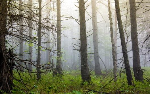Обои Туманный лес после дождя