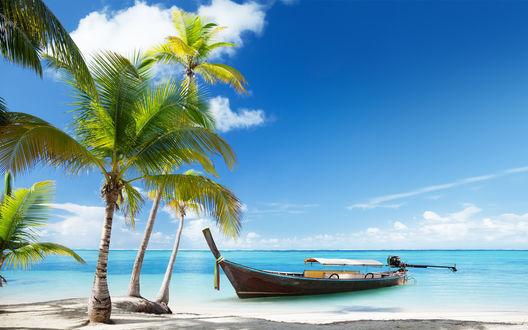 Обои Лодка и пальмы на песчаном морском побережье