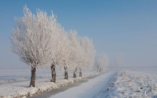 Обои Покрытые инеем тополя вдоль дороги среди покрытого снегом поля