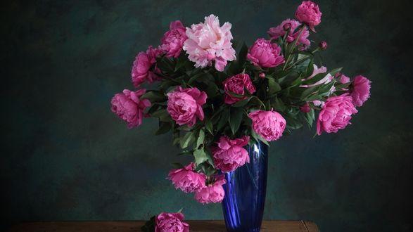Обои Розовые пионы в синей вазе