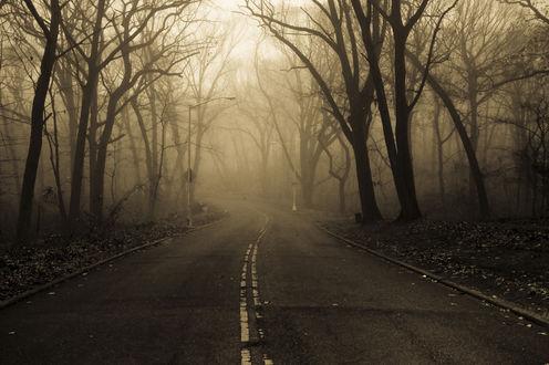 Обои Асфальтовая дорога, уходящая в туманный осенний лес