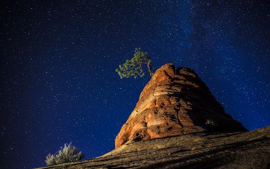 Обои Одинокое дерево, растущее на красивой скале, на фоне звездного, ночного неба