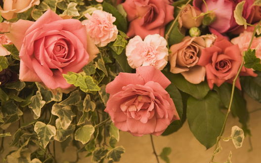 Обои Розовые розы среди листьев