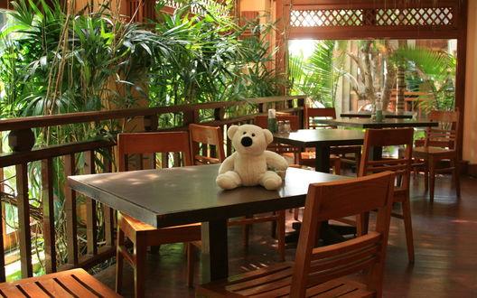 Обои Балкон отеля, на столе белый медвежонок