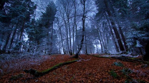 Обои Лесная дорога, усыпанная осенними листьями, на фоне деревьев, покрытых инеем