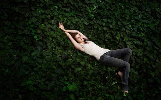 Обои Американская актриса Кристен Стюарт / Kristen Stewart лежит на листьях