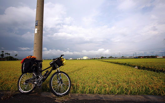 Обои Велосипед, прислоненный к столбу на фоне рисового поля, Тайвань / Taiwan