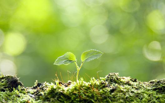 Обои Зеленый росток пробивается сквозь мох