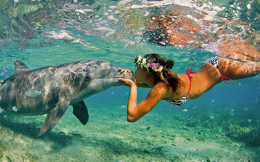 Обои Девушка целует дельфина под водой