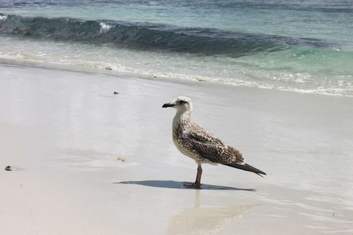 Обои Чайка на берегу моря