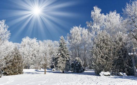 Обои Зимняя природа: лес, покрытый снегом, и яркое солнце в небе