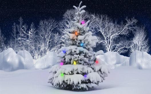 Обои Новогодняя наряженная елочка в лесу