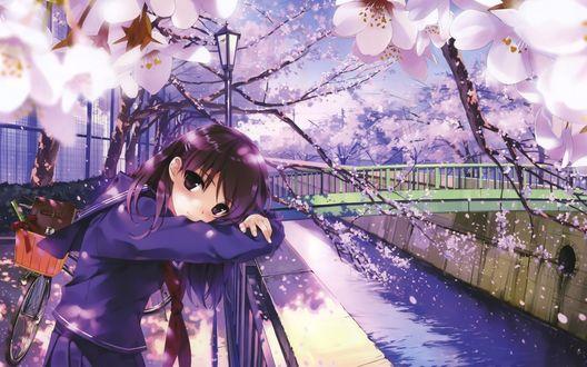 Обои Анимешная девушка школьница в период цветения сакуры стоит, облокотившись на перила, около моста через небольшой водный канал, рядом стоит её велосипед, арт мангаки Misaki Kurehito
