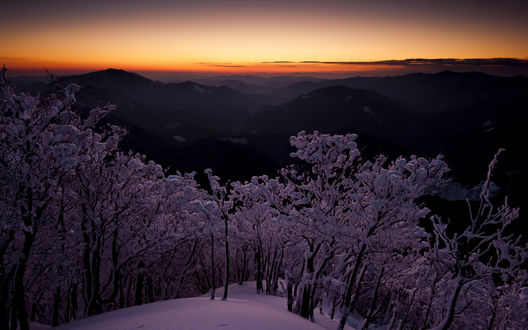 Обои Заснеженные деревья на возвышенности, с которой видны горы в закатном зареве