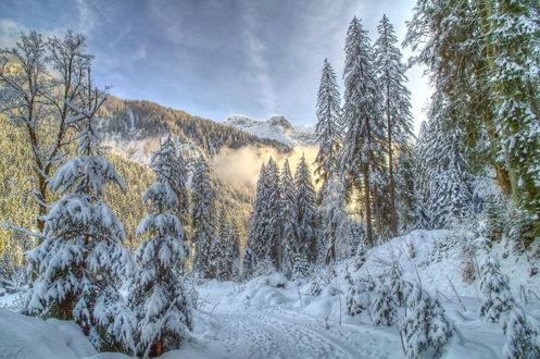 Обои Зимняя дорога в горах среди заснеженных елей