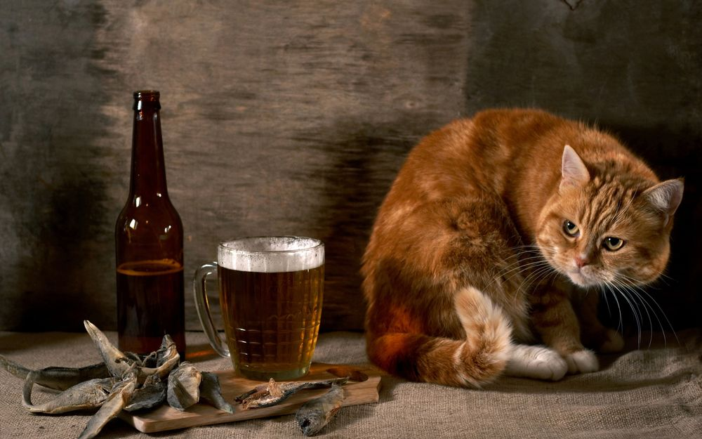 Фото рыжий кот на столе