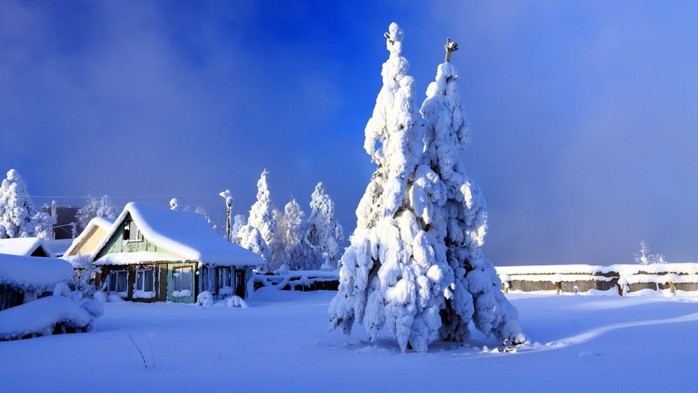 Картинки заснеженные деревья ели зимой