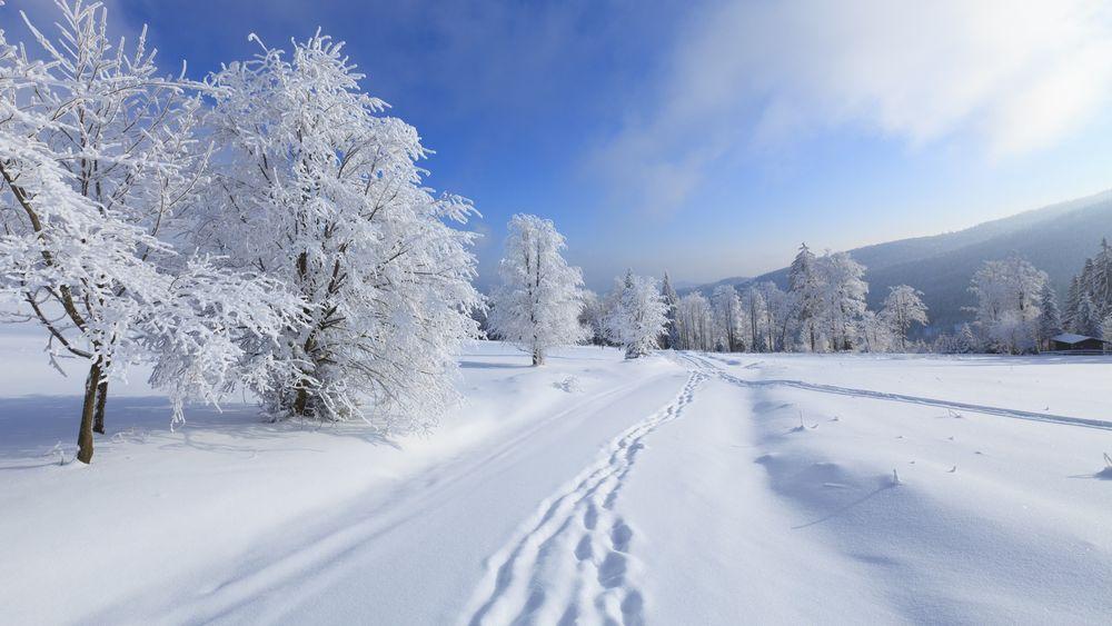 Обои для рабочего стола Зимняя дорога и деревья под снегом