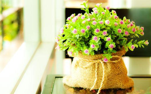 Обои Мешок с маленькими фиолетовыми цветами стоит на столе