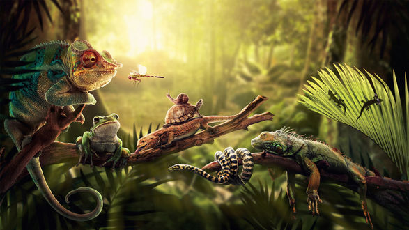 Обои Хамелеон, игуана, ящерица, черепаха ,змея, улитка, жаба и стрекоза сидят на папоротнике в джунглях
