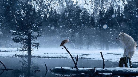 Обои Волк, сидящий на пеньке, внимательно наблюдает за совой, сидящей на ветке дерева, плавающего в водоеме, покрытом тонким слоем льда