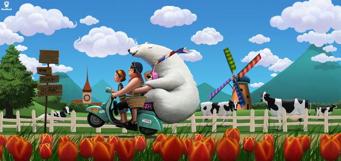 Обои Девочка с папой и белым медведем едут на мотороллере через поле тюльпанов, мельницы и пастбище коров