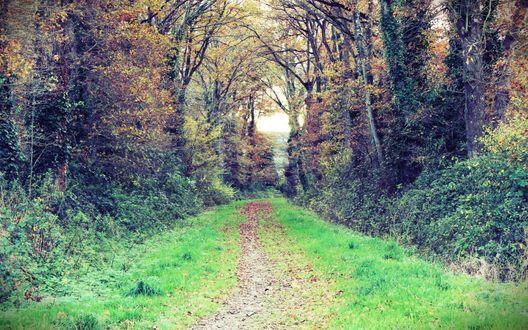 Обои Дорожка через осенний лес