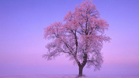 Обои На ветках дерева растут розовые листья