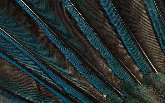 Обои Серо-зеленые перья на крыле