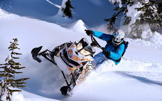 Обои Парень катается на снегоходе по чистому блестящему снегу среди елей