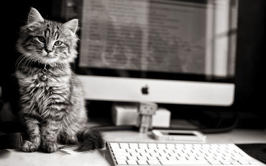 Обои Кошка сидит на столе рядом с монитором и клавиатурой