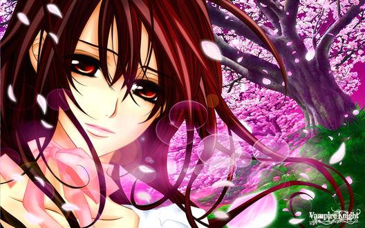 Обои Юки Кросс / Yuki Cross рядом с цветущей сакурой из аниме Рыцарь-вампир / Vampire Knight (Vampire Knight)