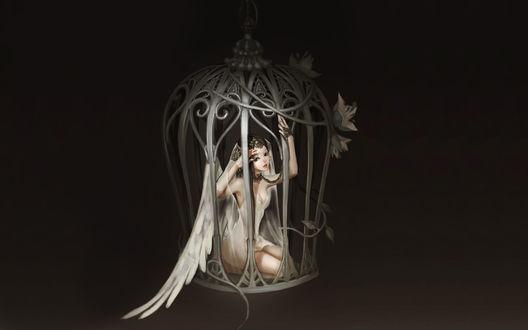 Обои Девушка-ангел заперта в клетке